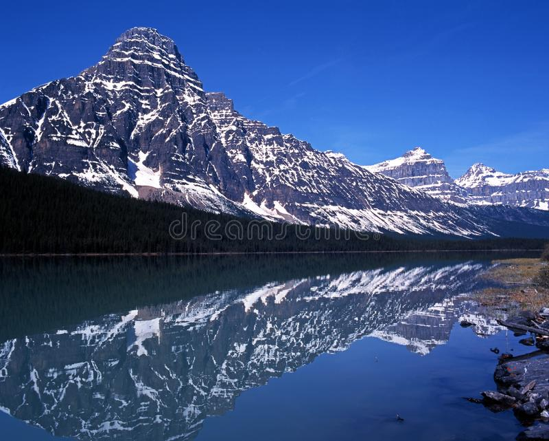 Aves acuáticas lago, Alberta, Canadá. foto de archivo