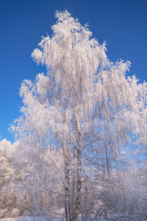 Aves congeladas cobertas de geadas e neve foto de stock royalty free