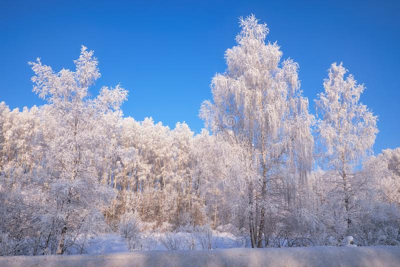 Aves congeladas cobertas de geadas e neve imagens de stock royalty free