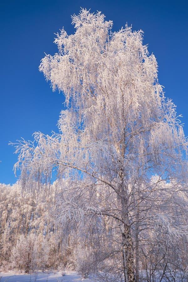 Aves congeladas cobertas de geadas e neve imagem de stock royalty free