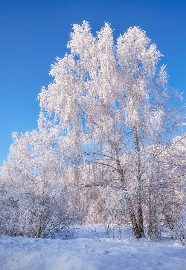 Aves congeladas cobertas de geadas e neve imagem de stock