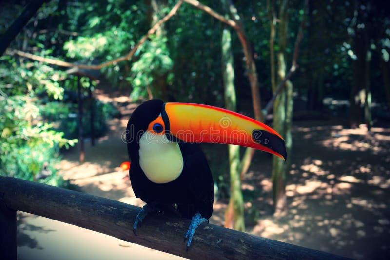 Aves de Parque DAS, Brésil photos stock