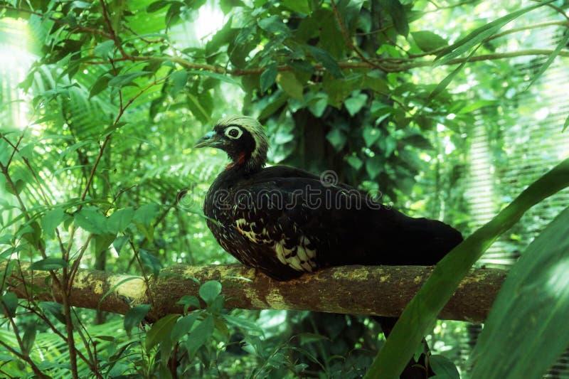 Aves de Parque DAS, Brésil images libres de droits