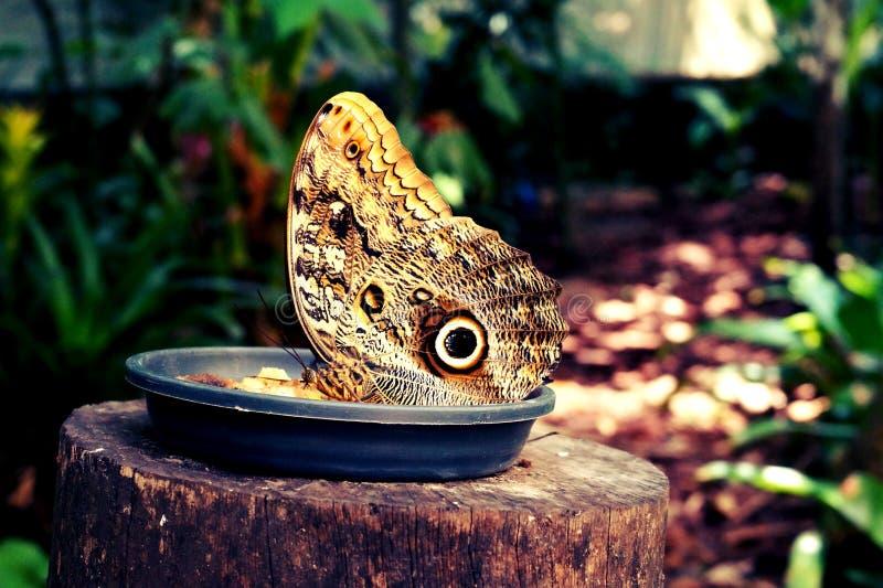 Aves de Parque DAS, Brésil images stock