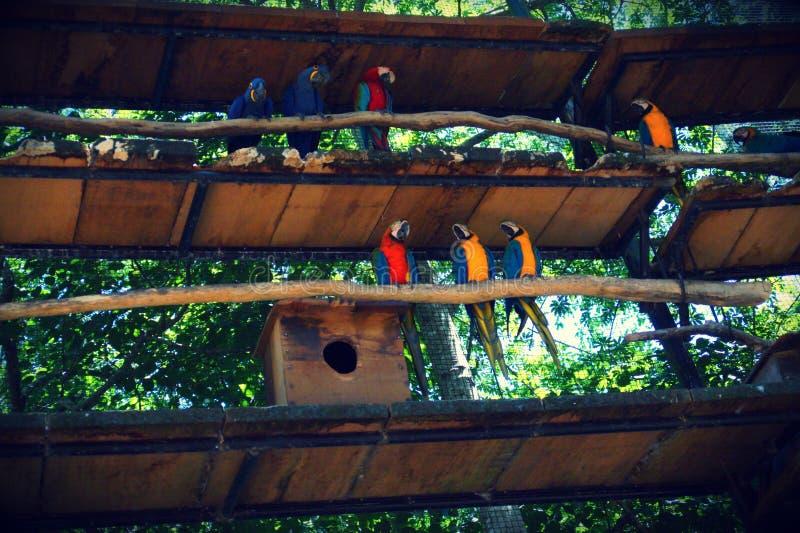 Aves de Parque DAS, Brésil photo libre de droits