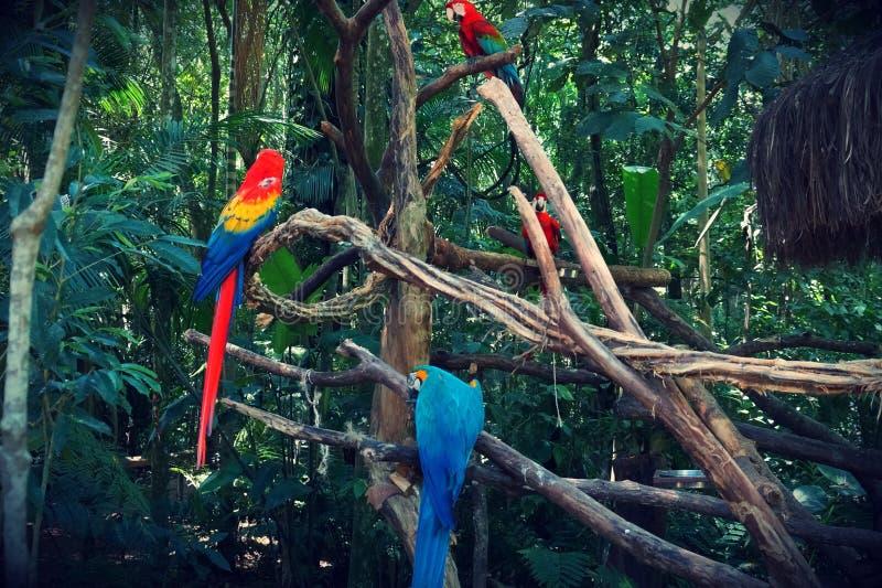 Aves de Parque DAS, Brésil photographie stock libre de droits