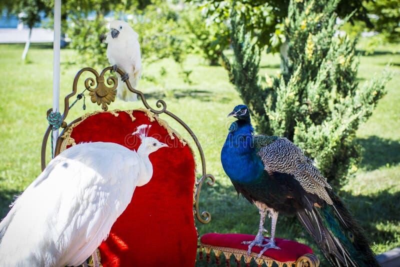 Aves del paraíso fotos de archivo libres de regalías