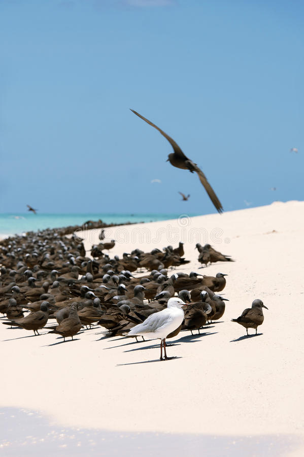 Aves marinas en la arena blanca foto de archivo libre de regalías