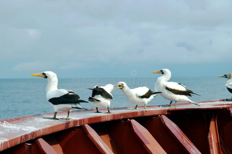Aves marinas que asientan en la cubierta del buque de carga foto de archivo libre de regalías