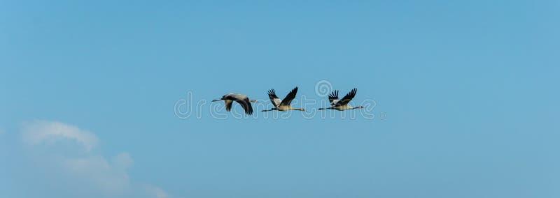 Aves migratórias fotos de stock