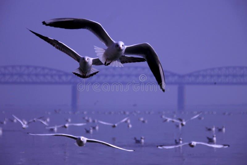 Aves migratorias en invierno imagen de archivo