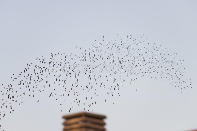 Aves voando em migração sobre uma chaminé imagem de stock