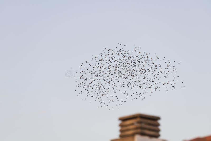 Aves voando em migração sobre uma chaminé foto de stock