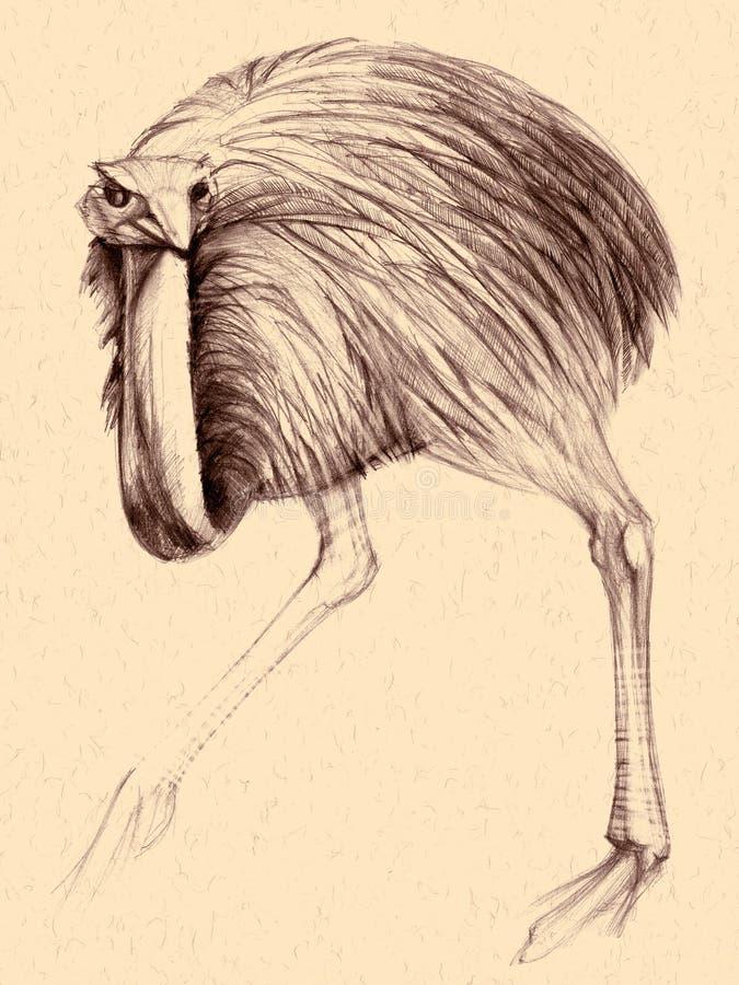 Avestruz ilustração royalty free