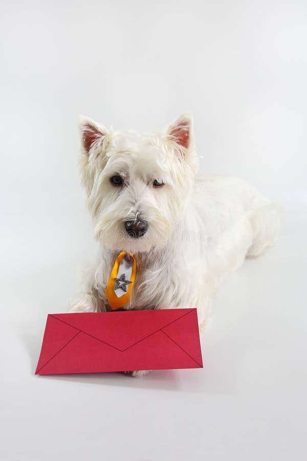 Avete posta del cane fotografie stock