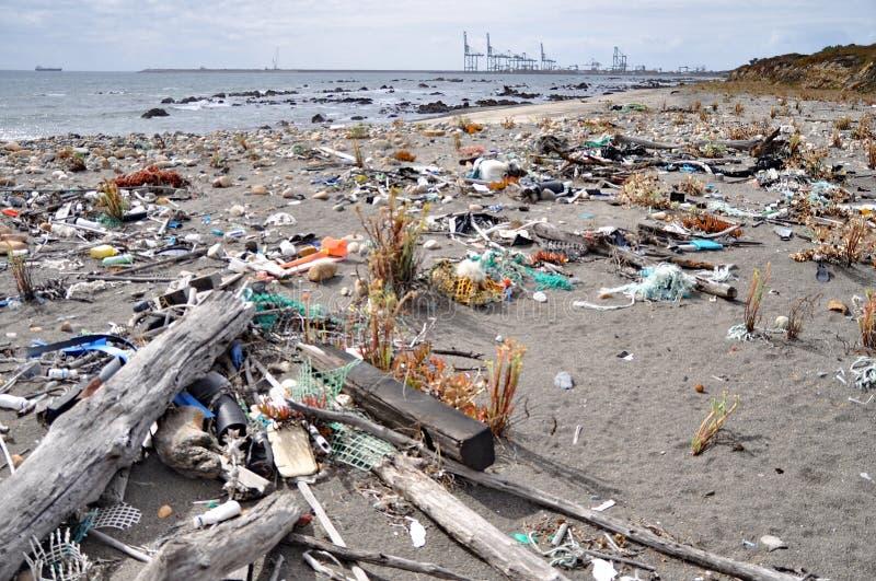 Avfall på seashoren royaltyfria bilder
