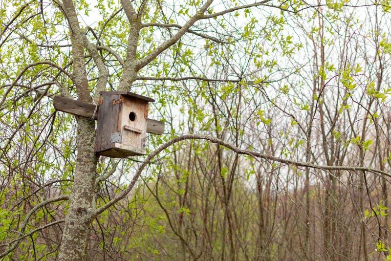 Aviário de madeira caseiro pregado a uma árvore Avi?rio no parque imagens de stock