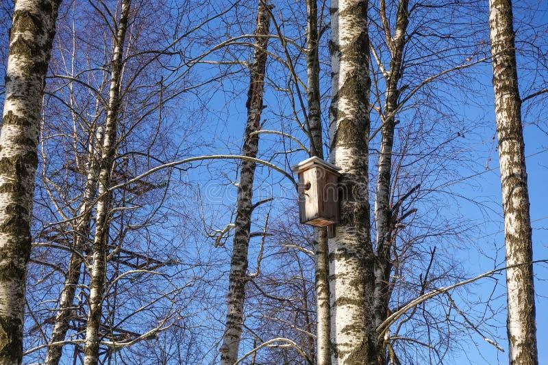 Aviário em uma árvore de vidoeiro na floresta do inverno imagens de stock royalty free