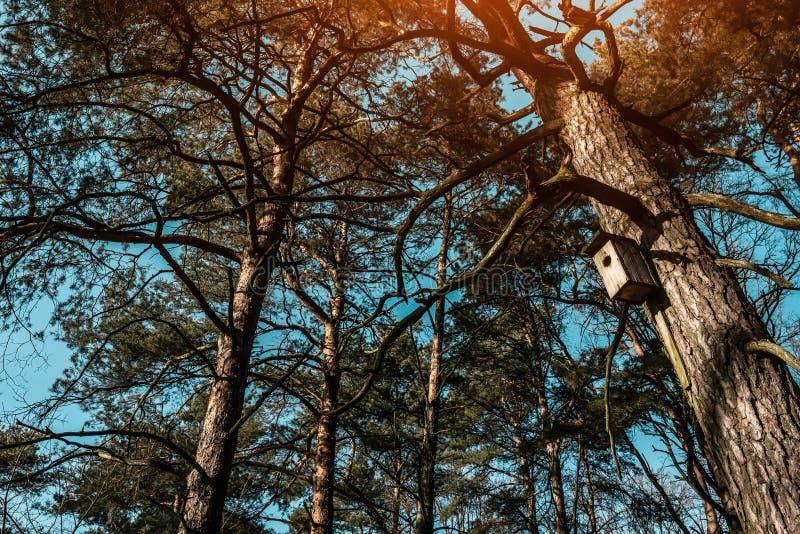 Aviário que pendura em uma árvore nas madeiras foto de stock