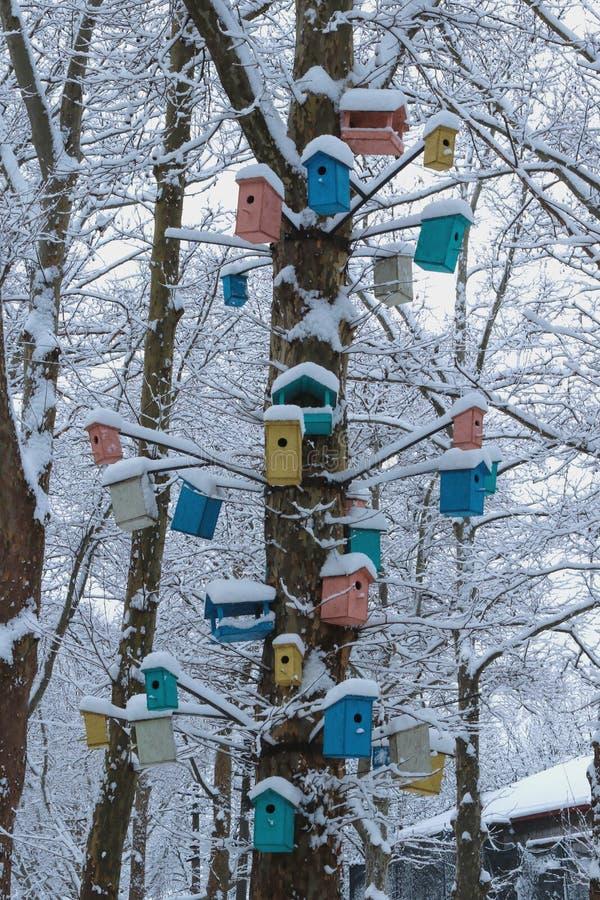 Aviários, casas e alimentadores coloridos do pássaro em uma árvore no inverno imagem de stock royalty free