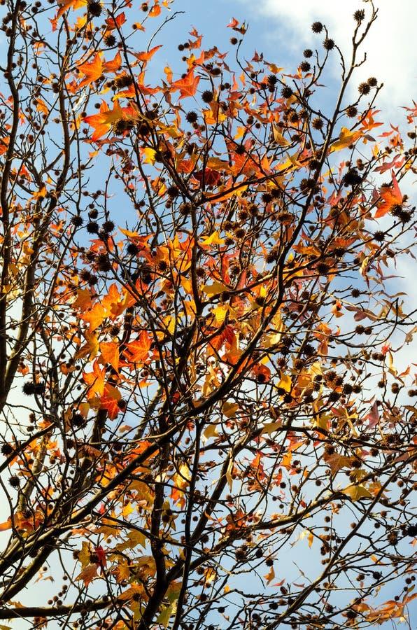 Avión con las hojas rojas y amarillas foto de archivo libre de regalías