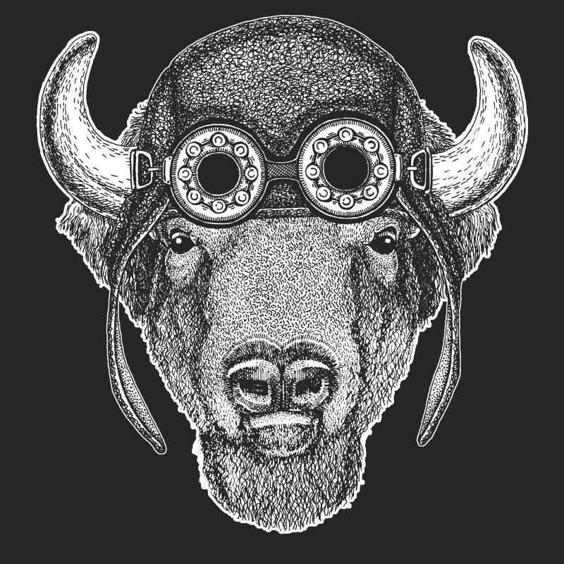 Aviador que lleva animal fresco, motocicleta, casco del motorista Búfalo, bisonte, buey, imagen dibujada mano del toro para el ta ilustración del vector