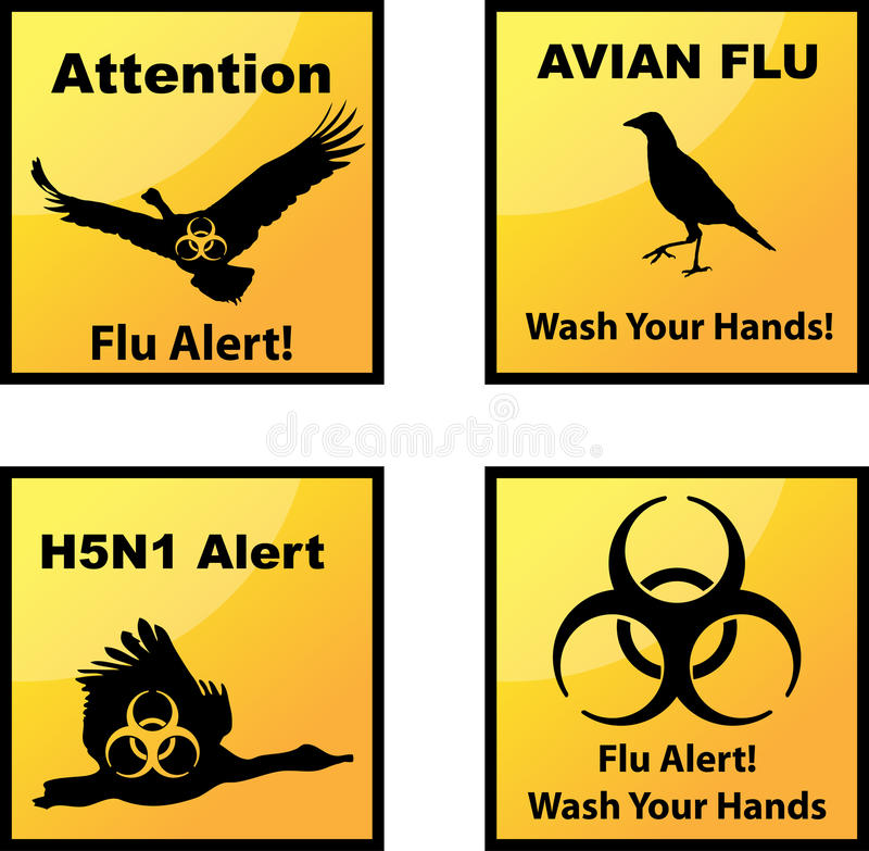 Avian flu alerts icons vector illustration