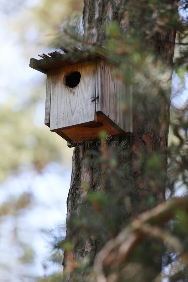 Aviario di legno su un pino nella foresta immagini stock