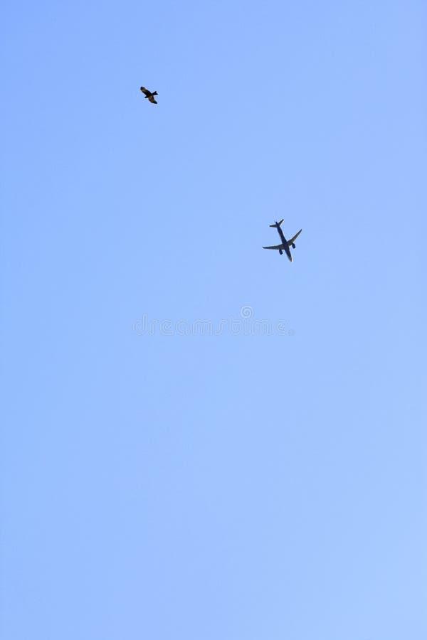 Aviario ed aviazione - aereo di aria e dell'uccello nel fondo del cielo blu immagini stock