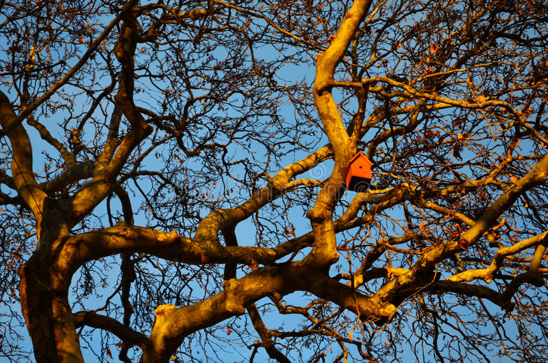 Aviario nei rami dell'albero del sicomoro immagini stock