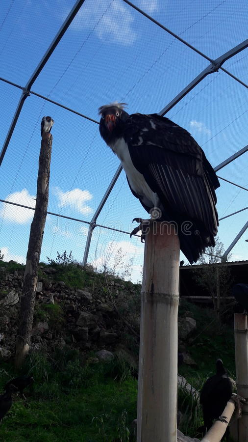 Aviary хищника стоковая фотография