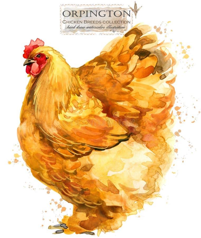 Avicoltura Il pollo cresce serie uccello domestico dell'azienda agricola royalty illustrazione gratis