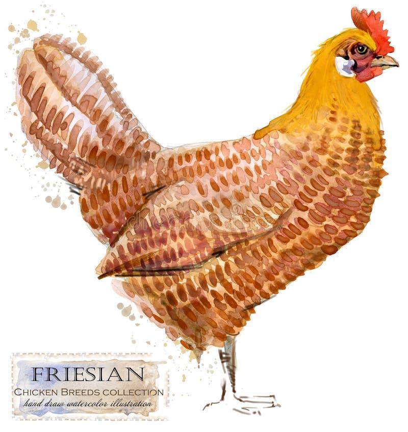 Avicultura El pollo cría serie ejemplo nacional de la acuarela del pájaro de la granja stock de ilustración
