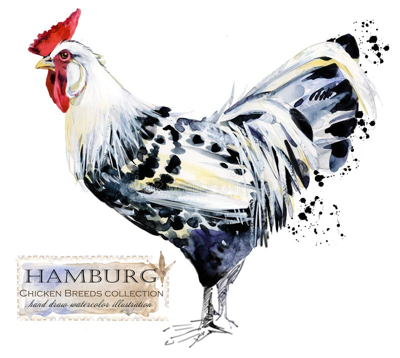 Avicultura El pollo cría serie pájaro nacional de la granja stock de ilustración