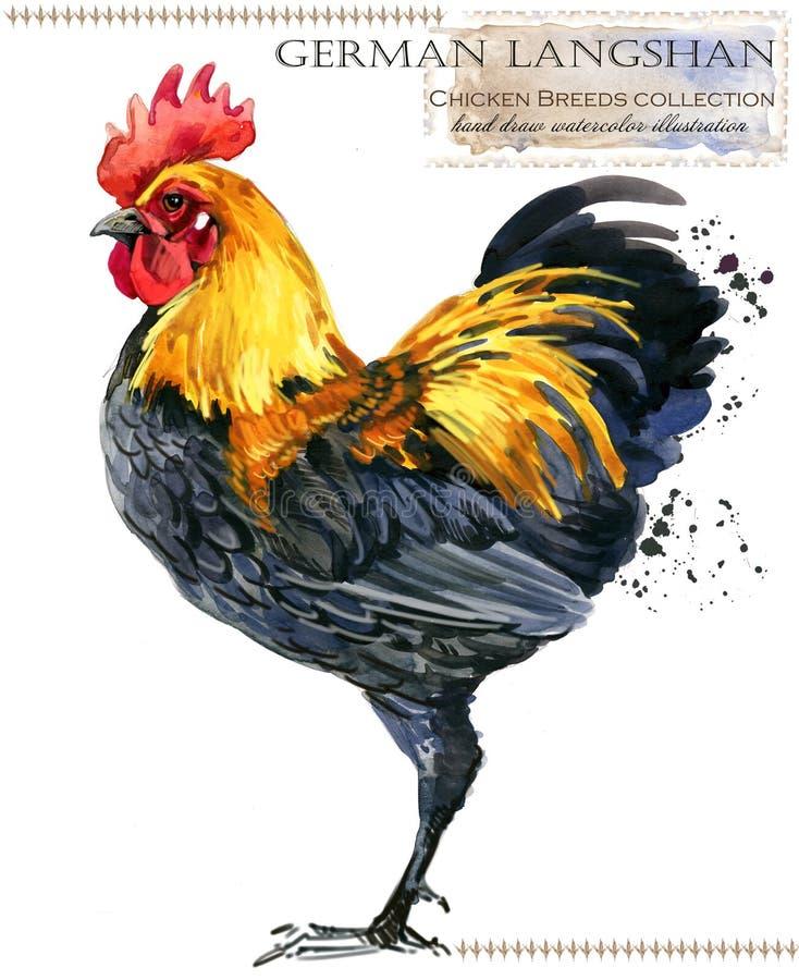 Avicultura El pollo cría serie pájaro nacional de la granja ilustración del vector
