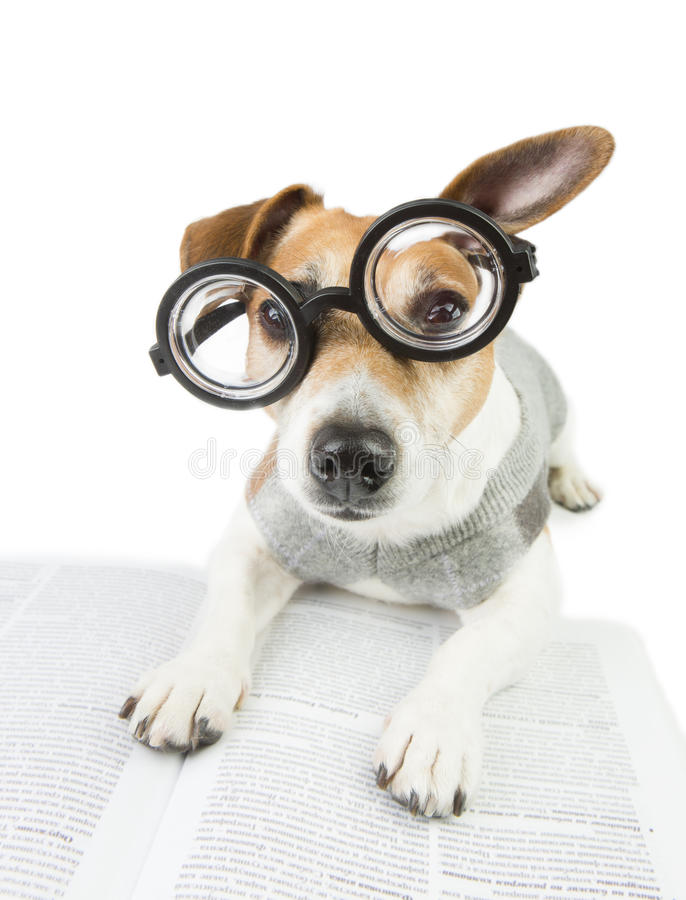 Avid cool funny reader. Glasses for poor vision. Smart funny dog is Studying royalty free stock image