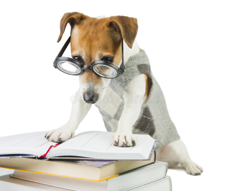 Avid smart reader. Glasses for poor vision. Smart funny dog Jack Russell terrier is Studying stock photos