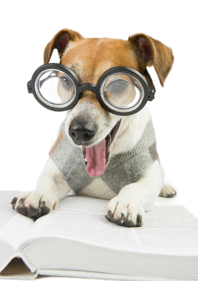 Avid tired reader. Glasses for poor vision. Smart funny dog is Studying stock photos
