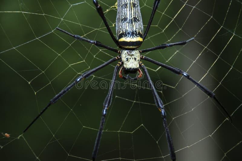 Avidité de fond naturel d'araignée photographie stock libre de droits
