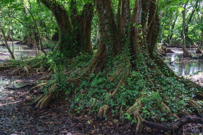 Aview towars de bomen royalty-vrije stock foto