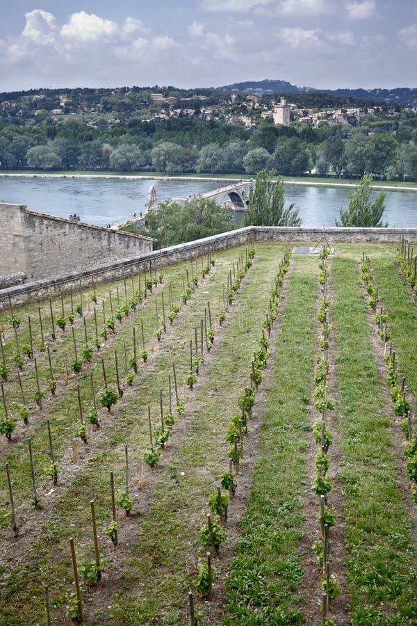 Avignon's bridge stock photo
