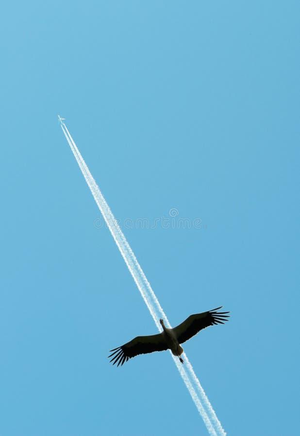 Avion et une cigogne photo stock