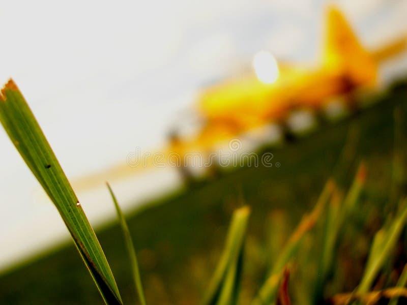 Avion sur une piste d herbe