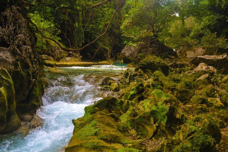 Avis Falls arkivfoton