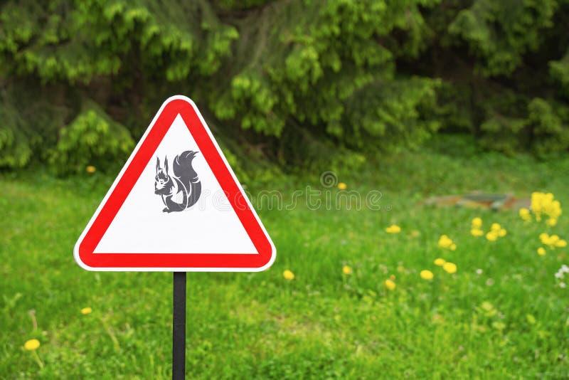Aviso vermelho do sinal do triângulo dos esquilos da presença no fundo de árvores verdes no parque imagens de stock