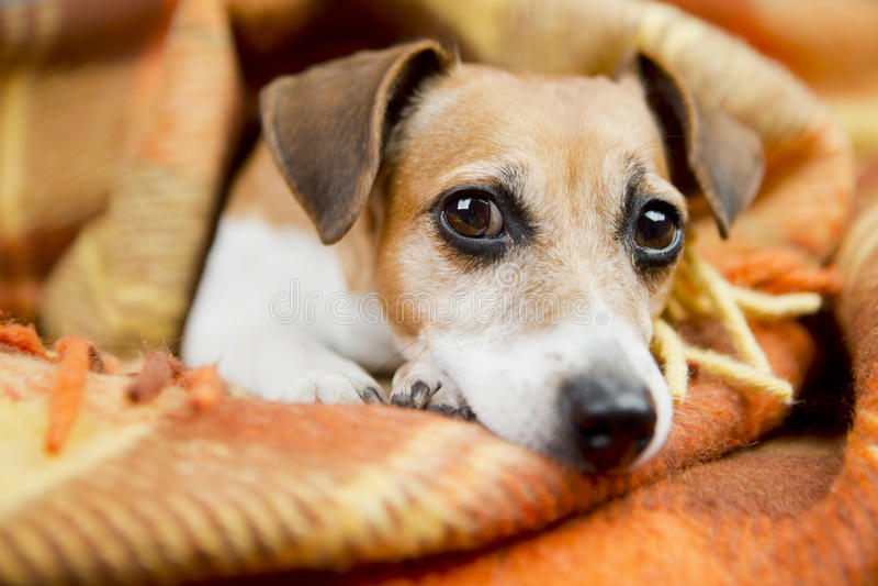 Avkopplad härlig hund royaltyfri fotografi