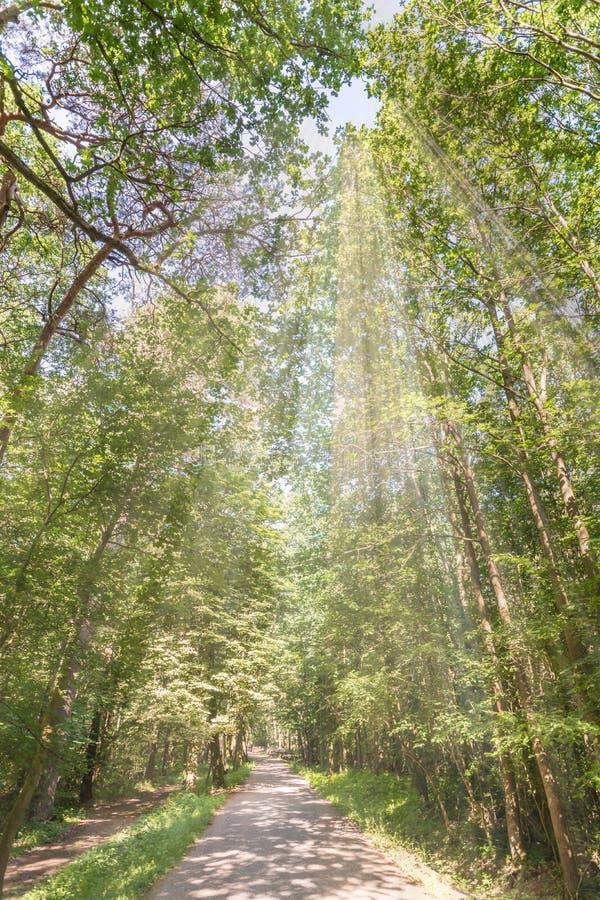 Avkoppling i natur i skogen nästan staden royaltyfri foto