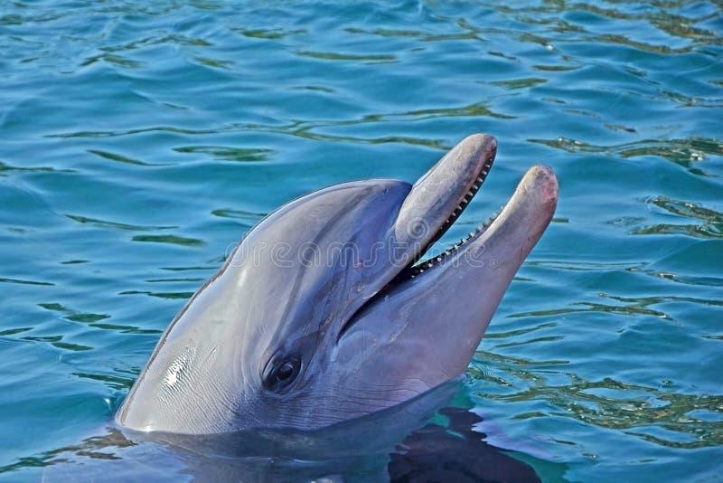 Avkopplingdelfin dök upp från vattnet och leendet Solig dag i delfinreven i Eilat, Röda havet i Israel arkivbild