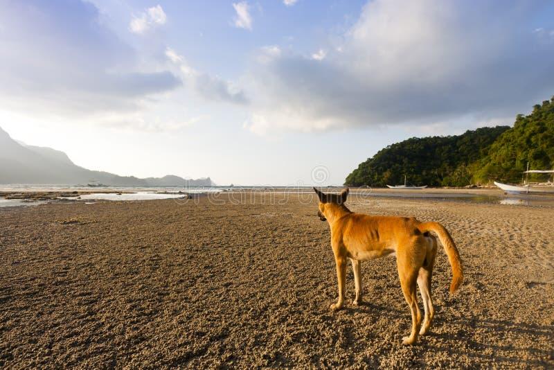 avlägsen hund som ser stället arkivbilder