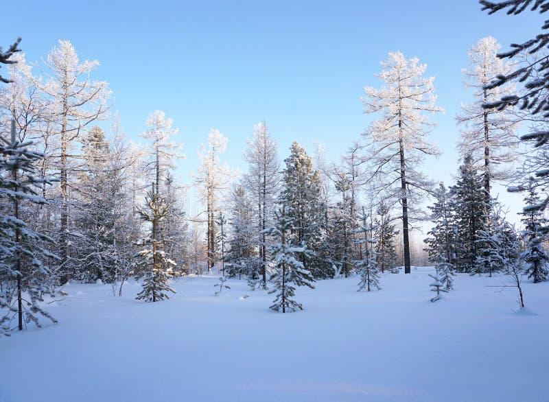 Avlägsen nord för vinterlandskapskog arkivbild